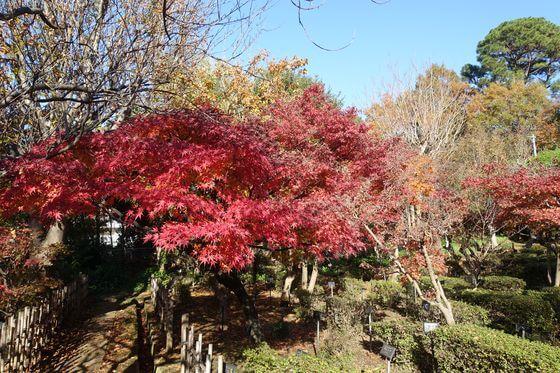 花と緑の振興センター 西園 紅葉