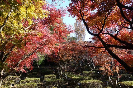 花と緑の振興センター 紅葉