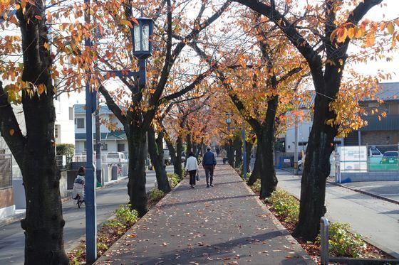 花と緑の散歩道 紅葉