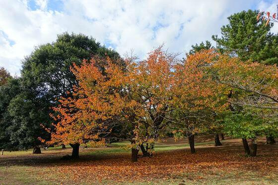 光が丘公園 芝生広場 紅葉
