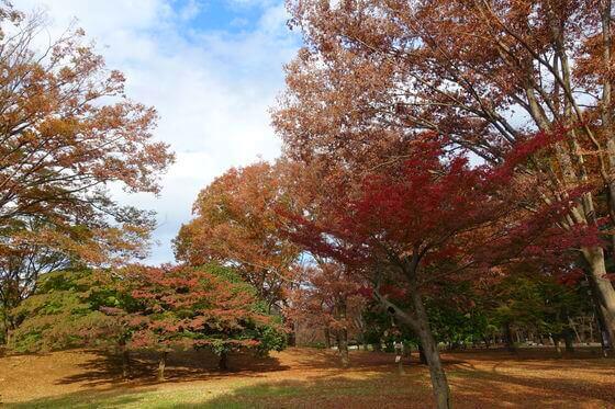 光が丘公園 憩いの森 紅葉