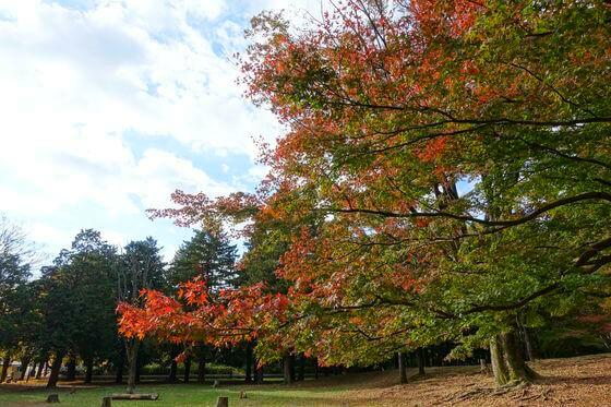光が丘公園 紅葉 現在
