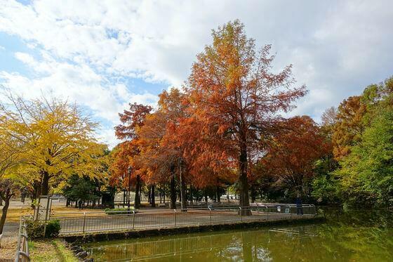光が丘公園 観賞池 紅葉