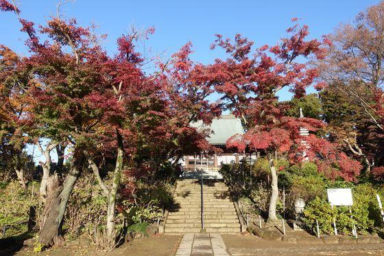 紅葉 本土寺
