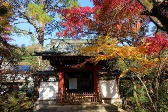 本土寺 赤門 紅葉