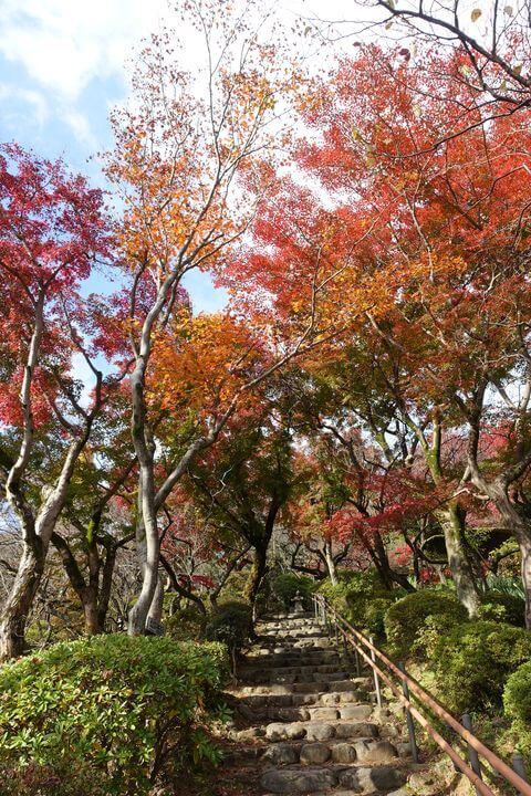 京王百草園 紅葉