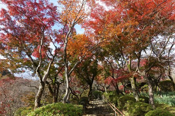 百草園 紅葉