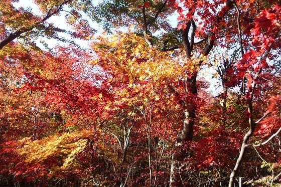 小林もみじ園 紅葉 現在