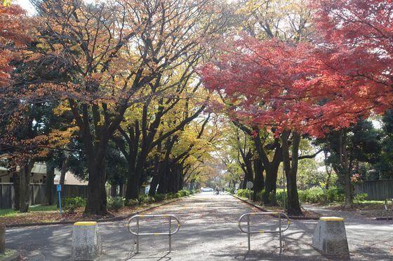 小金井公園 紅葉