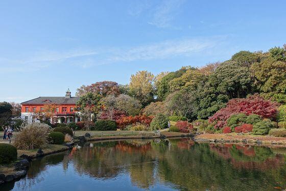 小石川植物園 日本庭園 紅葉