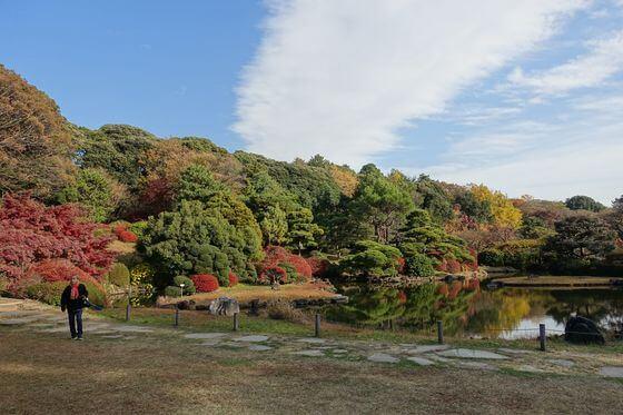 小石川植物園 紅葉 見頃
