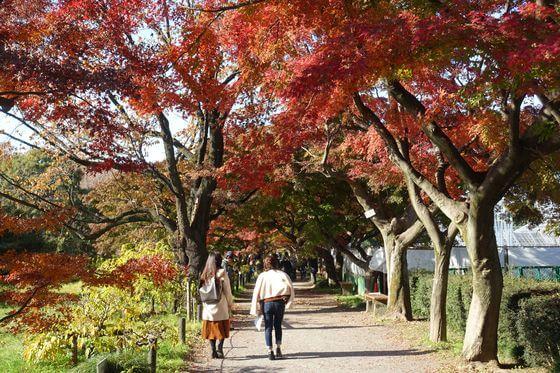 小石川植物園 紅葉