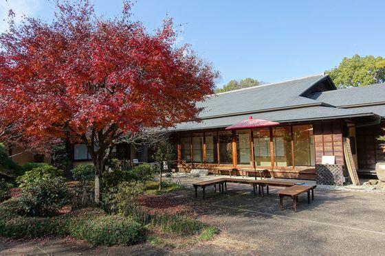 航空公園 日本庭園 紅葉