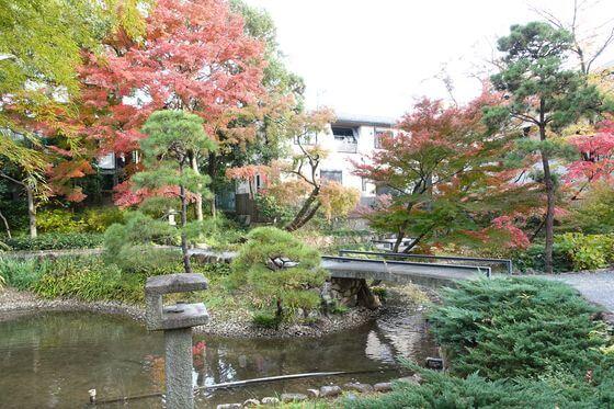 紅葉 向山庭園