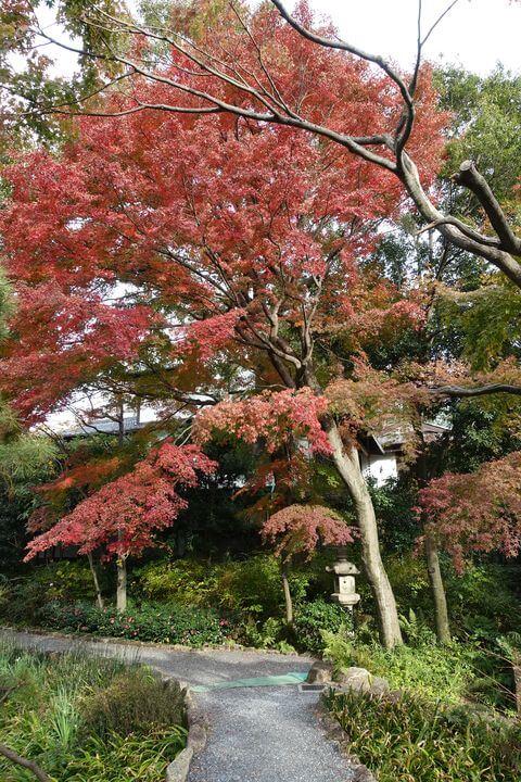 練馬区 向山庭園 紅葉