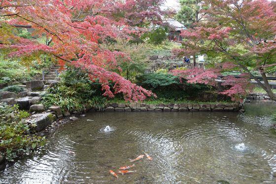 練馬 向山庭園 紅葉