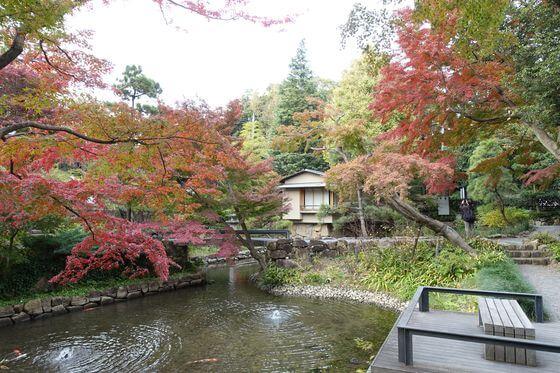 向山庭園 紅葉