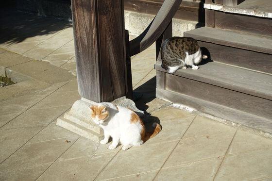 興禅院 猫