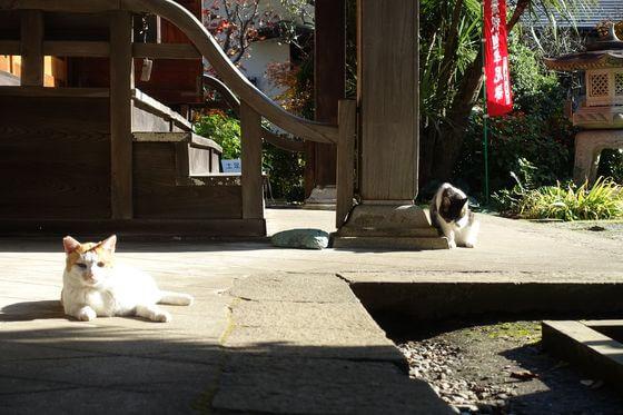 興禅院 川口 猫
