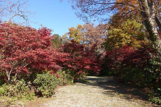 興禅院 ふるさとの森 紅葉