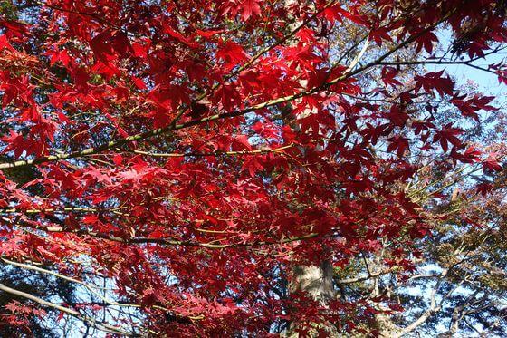 興禅院 紅葉 現在