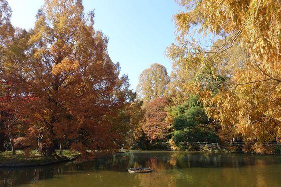 大宮公園 紅葉 見頃