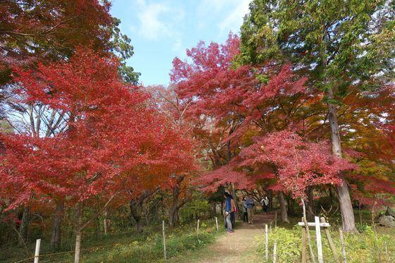 武蔵嵐山 紅葉