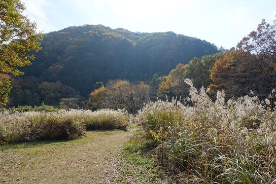 嵐山渓谷 すすき