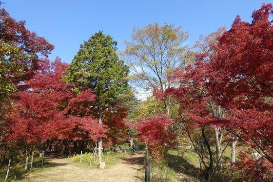 嵐山渓谷 紅葉 見頃