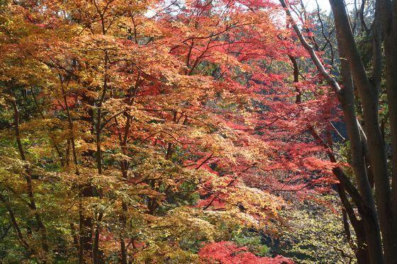 嵐山渓谷 紅葉 現在