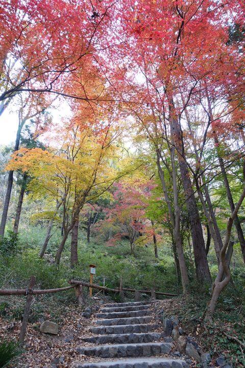 嵐山渓谷 モミジ