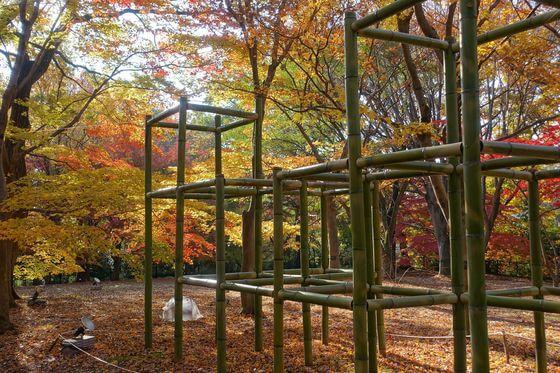 国営武蔵丘陵森林公園 カエデ
