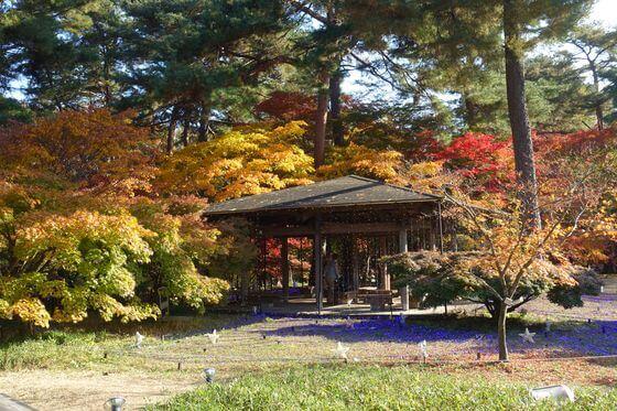 武蔵丘陵森林公園 紅葉