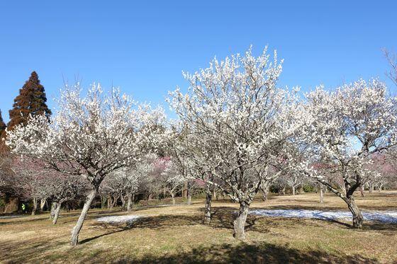 昭和の森 梅園