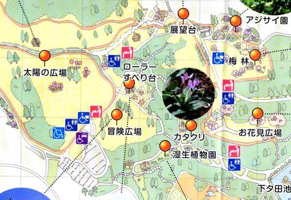 昭和の森 梅 場所