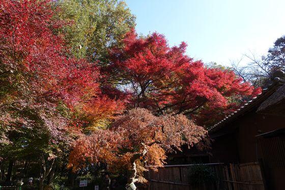 睡足軒の森 紅葉