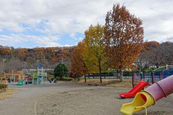 阿須運動公園 紅葉