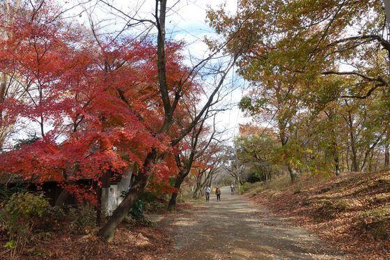 弘法山公園 馬場道 紅葉