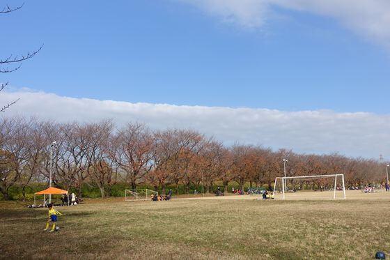 川越水上公園 桜の木 紅葉