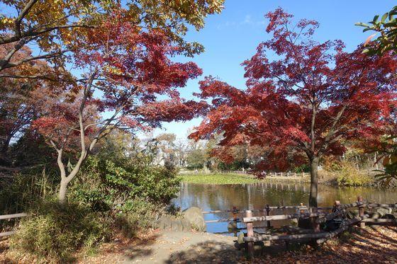 菊名池公園 紅葉