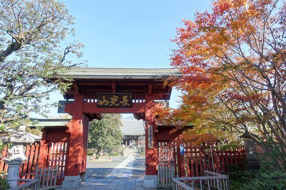 妙蓮寺 横浜 紅葉