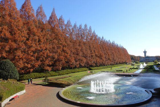相模原公園 紅葉