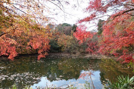 震生湖 紅葉