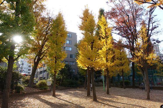 竹早公園 紅葉