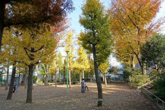 竹早公園 文京区 紅葉