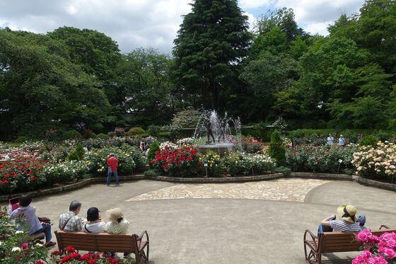 里見公園 バラ園