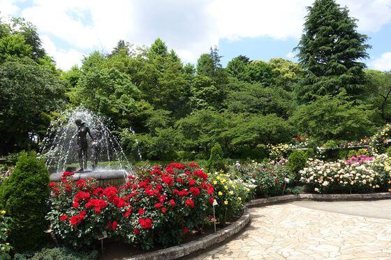 里見公園 バラ
