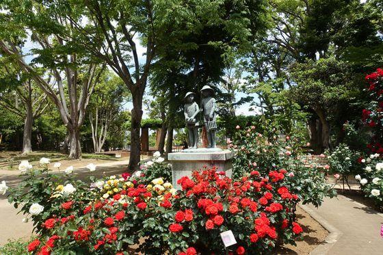 市川 須和田公園 バラ