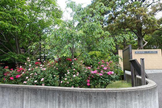 市川市芳澤ガーデンギャラリー バラ