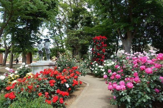 須和田公園 バラ 見頃